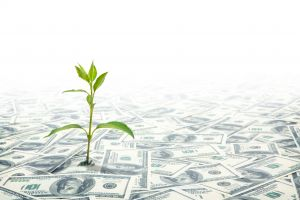 Small Green Plant Growing on the Field of Dollars Notes
